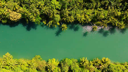 Beautiful natural scenery of Loboc river in tropical green forest. Bohol, Philippines.