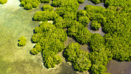 Aerial view of panoramic mangrove forest. Mangrove landscape. Mindanao, Philippines. Standard-Bild - 156990644