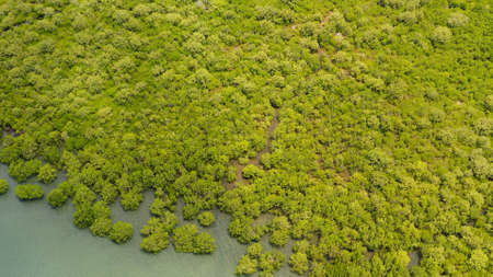 Aerial view of panoramic mangrove forest. Mangrove landscape. Mindanao, Philippines.