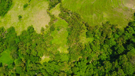 Top view of agricultural land and rice fields. Philippines, Bohol. Standard-Bild
