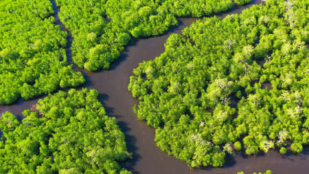 Aerial view of panoramic mangrove forest. Mangrove landscape. Mindanao, Philippines. Standard-Bild - 156990647