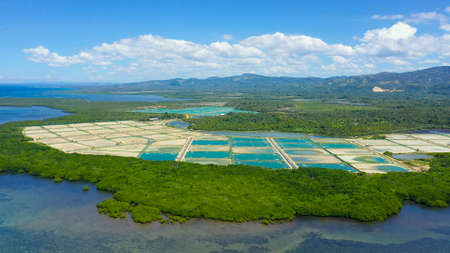 Aerial view of a fishery and prawn farm in Bohol, Philippines. Ponds for shrimp farming.