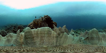 Tropical Fishes on Coral Reef, underwater scene. Philippines. 360 panorama VR