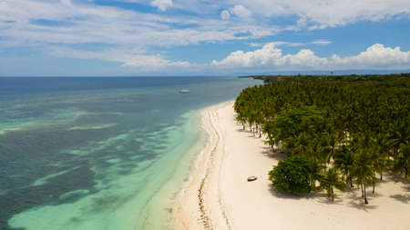 Tropical beach with sea and palm. Beautiful beach and tropical sea. Panglao island, Bohol, Philippines. Summer and travel vacation concept. Reklamní fotografie