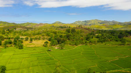 Summer tropical landscape. Green hills and mountains with tropical vegetation and blue sky with clouds. Bohol, Philippines.