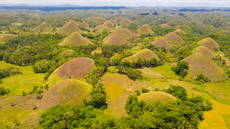 Amazingly shaped Chocolate hills on sunny day on Bohol island, Philippines.
