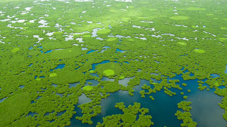 Aerial view of Lake Baloi with green mangroves. Mindanao, Philippines. Tropical landscape with mangrove forest.