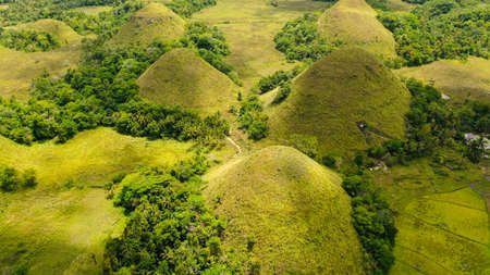 Aerial drone of the chocolate hills, a famous tourist destination on the island of Bohol, Philippines.