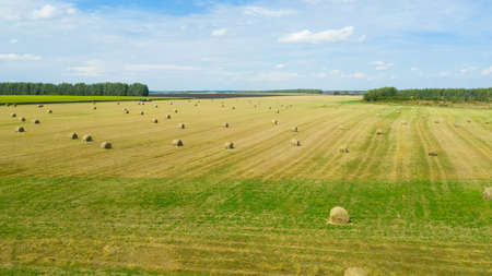 Rural fields after harvesting with round stacks of golden straw are collected in many rolls. Landscape meadow with hay bales after harvest. Reklamní fotografie