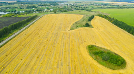 Rolls of haystacks on the field after harvest. Large wheaten field with cylindrical haystacks in summer day.