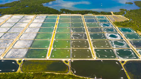 Prawn farm with aerator pump view from above. Bohol, Philippines. The growing aquaculture business continuously threatening the nearby wetlands. Reklamní fotografie