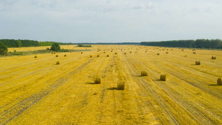 Top view of golden agricultural field with bales of hay. Bales of wheat after harvesting on the field. Agricultural field made of yellow round round big bales after harvest, straw rolls, straw bales in the agricultural field.