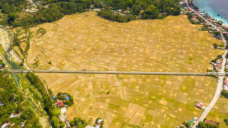 Farming and growing plants in rural areas of Bohol, Philippines.