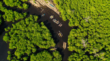 Tropical mangrove green tree forest view from above, trees, river. Mangrove landscape, Ecosystem and healthy environment concept. Mindanao, Philippines. Reklamní fotografie
