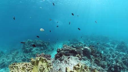 Underwater fish garden reef. Reef coral scene. Seascape under water. Panglao, Bohol, Philippines. Reklamní fotografie
