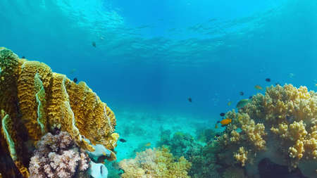 Underwater Scene Coral Reef. Tropical underwater sea fishes. Panglao, Bohol, Philippines. Reklamní fotografie