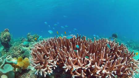 Underwater Scene Coral Reef. Tropical underwater sea fishes. Panglao, Bohol, Philippines. Reklamní fotografie