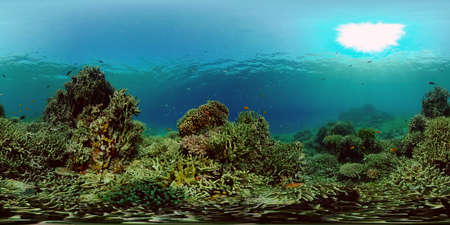 Underwater Scene Coral Reef. Underwater sea fish. Tropical reef marine. Colourful underwater seascape. Philippines. Virtual Reality 360.