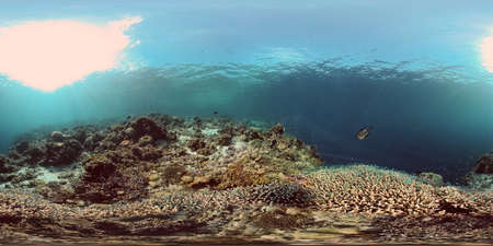 Tropical sea and coral reef. Underwater Fish and Coral Garden. Underwater sea fish. Tropical reef marine. Colourful underwater seascape. Philippines. Virtual Reality 360.