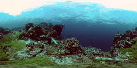 Colourful tropical coral reef. Scene reef. Marine life sea world. Philippines. Virtual Reality 360. Stok Fotoğraf