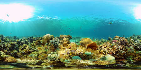 Tropical coral reef. Underwater fishes and corals. Underwater fish reef marine. Philippines. Virtual Reality 360.