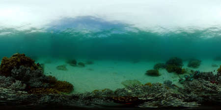 Tropical Seascape Underwater Life. Tropical underwater sea fish. Philippines. 360 panorama VR