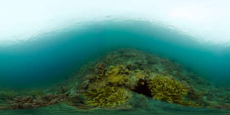 Underwater fish reef marine. Tropical colourful underwater seascape. Philippines. Virtual Reality 360. Stok Fotoğraf