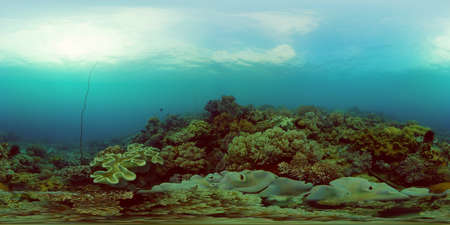 Coral reef and tropical fishes. The underwater world of the Philippines. Underwater colorful tropical coral reef seascape. 360 panorama VR