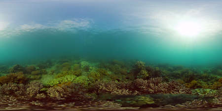 Soft and hard corals. Underwater fish garden reef. Reef coral scene. Philippines. Virtual Reality 360.