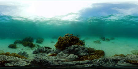 Reef Coral Tropical Garden. Tropical underwater sea fish. Colourful tropical coral reef. Philippines. 360 panorama VR