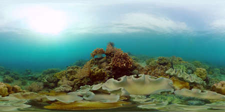 Reef coral scene. Colourful underwater seascape. Beautiful soft coral. Sea coral reef. Philippines. 360 panorama VR Stok Fotoğraf