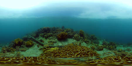 Tropical colourful underwater seas. Coral Garden with Underwater Vibrant Fish. Underwater tropical colourful soft-hard corals seascape. Philippines. 360 panorama VR