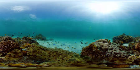 Reef Coral Scene. Tropical underwater sea fish. Hard and soft corals, underwater landscape. Philippines. Virtual Reality 360.