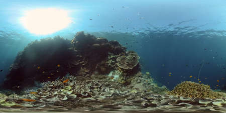 Underwater tropical colourful soft-hard corals seascape. Underwater fish reef marine. Philippines. 360 panorama VR
