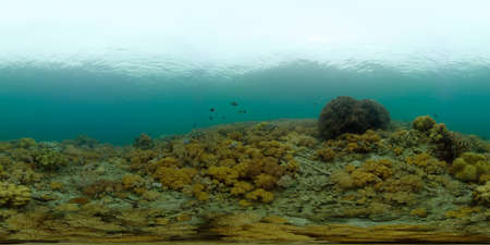 Tropical colourful underwater seascape.The underwater world with colored fish and a coral reef. Philippines. 360 panorama VR Stok Fotoğraf