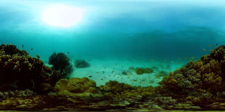 Coral garden seascape. Colourful tropical coral. Philippines. 360 panorama VR