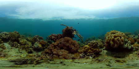Colourful tropical coral reef. Scene reef. Seascape under water. Philippines. Virtual Reality 360.
