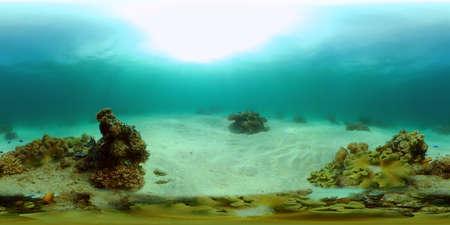 Marine life sea world. Underwater fish reef marine. Tropical colourful underwater seas. Philippines. 360 panorama VR