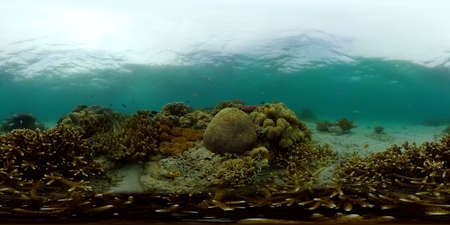 Tropical Underwater Colorful Reef. Tropical underwater sea fish. Philippines. Virtual Reality 360.