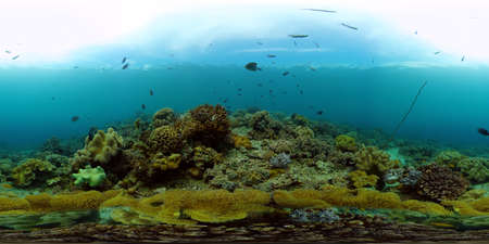 Tropical coral reef and fishes underwater. Hard and soft corals. Philippines. Virtual Reality 360.