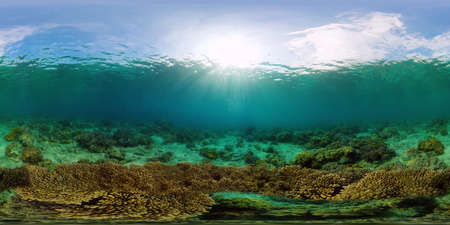 Beautiful underwater landscape with tropical fishes and corals. Life coral reef. Reef Coral Garden Underwater. Philippines. 360 panorama VR