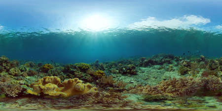Tropical fishes and coral reef at diving. Beautiful underwater world with corals and fish. 360 panorama VR