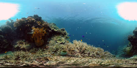 Beautiful underwater world with coral reef and tropical fishes. Colourful tropical coral reef. Philippines. Travel vacation concept 360 panorama VR Stok Fotoğraf