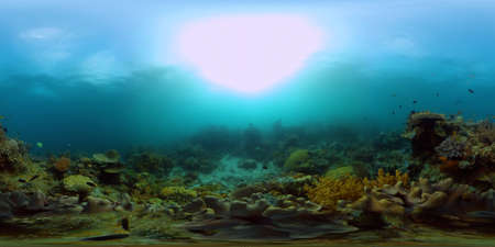 Coral reef and tropical fishes. The underwater world of the Philippines. Philippines. 360 panorama VR