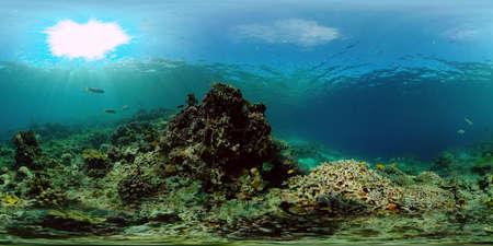Reef Marine Underwater Scene. Tropical underwater sea fish. Philippines. Virtual Reality 360.