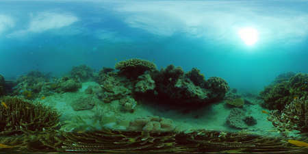 Coral Reef and Fishes Underwater. Underwater fish reef marine. Tropical colorful underwater seascape with coral reef. Philippines. 360 panorama VR