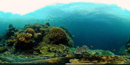 The underwater world of coral reef with fishes at diving. Coral garden under water. Coral Reef Fish Scene. Philippines. 360 panorama VR Stok Fotoğraf