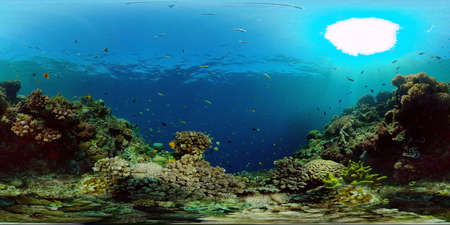 Sea coral reef. Underwater Tropical Sea Seascape. Tropical fish reef marine. Philippines. Virtual Reality 360.