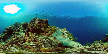 Wonderful and beautiful underwater colorful fishes and corals in the tropical reef. Philippines. 360 panorama VR