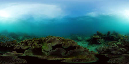 The Underwater World of the with Colored Fish and a Coral Reef. Tropical reef marine. Philippines. Virtual Reality 360.